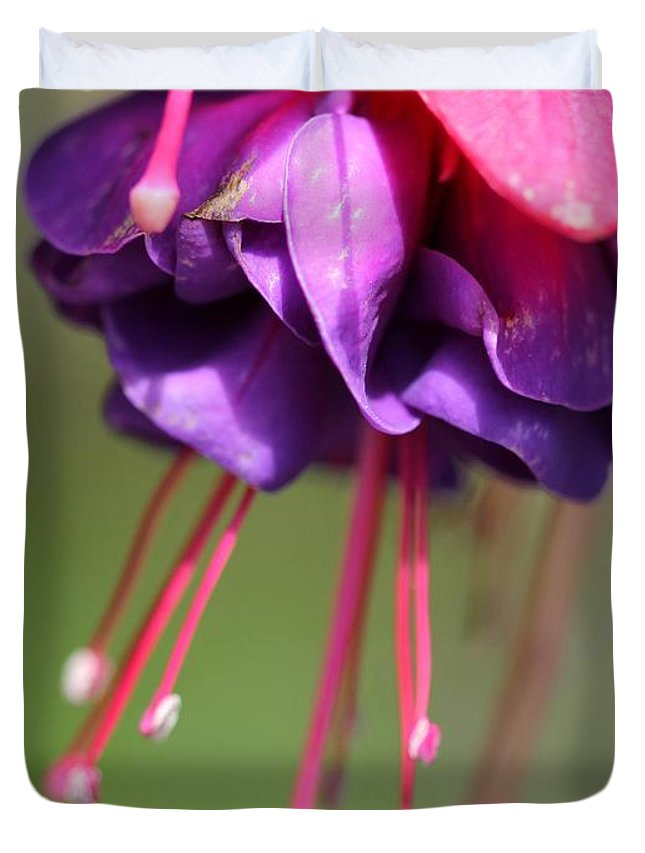 Mccombie Duvet Cover featuring the photograph Fuchsia Named Dark Eyes by J McCombie