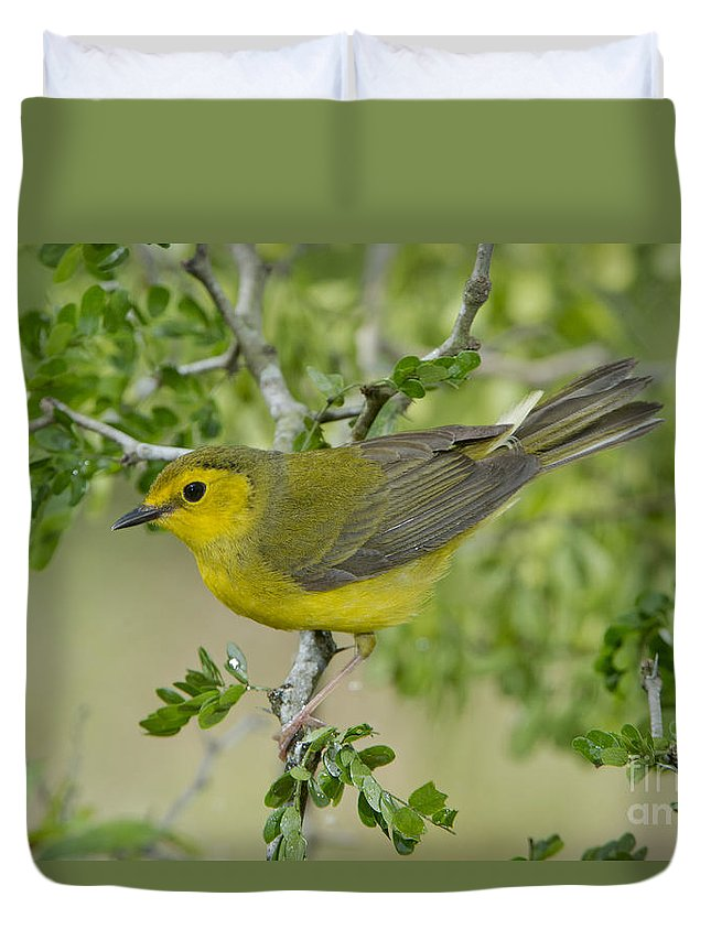 Hooded Warbler Duvet Cover featuring the photograph Hooded Warbler by Anthony Mercieca