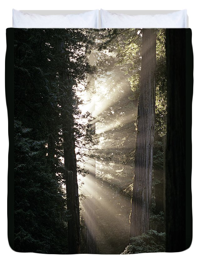 Travel Duvet Cover featuring the photograph Jedediah Smith Redwoods State Park Redwoods National Park Del No by Jim Corwin