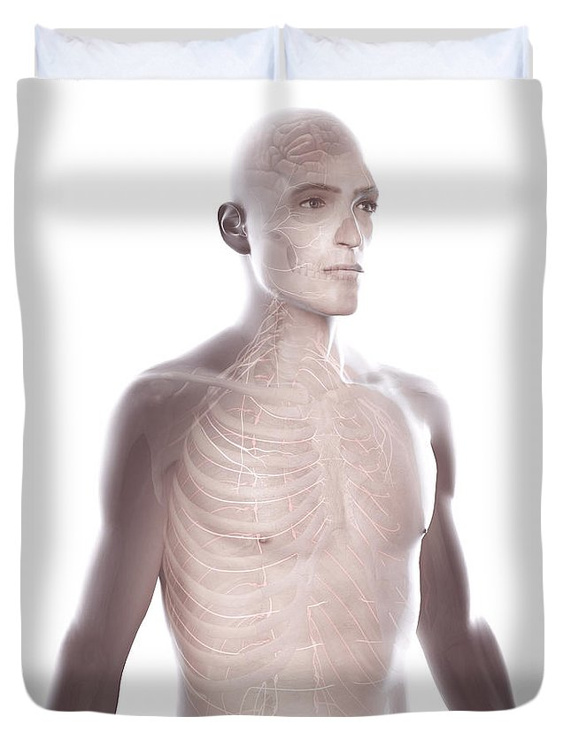 Hemisphere Duvet Cover featuring the photograph Nerves Of The Upper Body by Science Picture Co