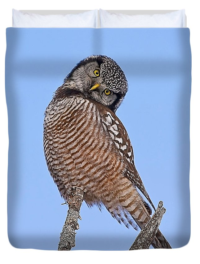 Northern Hawk Owl Duvet Cover featuring the photograph Northern Hawk Owl by John Vose