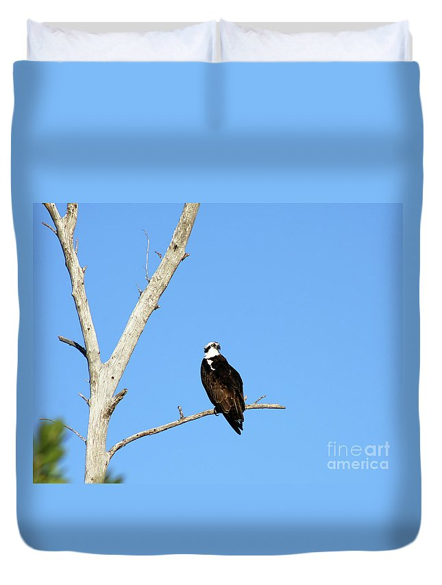 Feather Duvet Cover featuring the photograph Osprey by Christiane Schulze Art And Photography