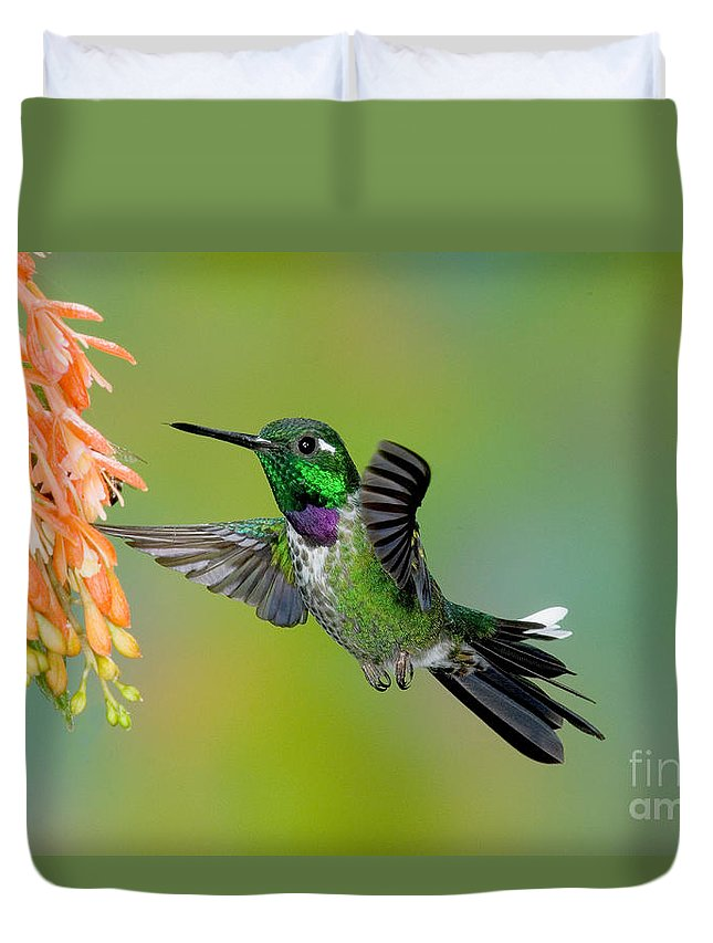 Fauna Duvet Cover featuring the photograph Purple-bibbed Whitetip Hummingbird by Anthony Mercieca