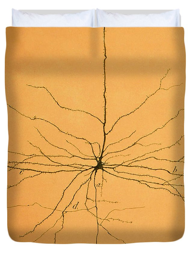 Pyramidal Cell Duvet Cover featuring the photograph Pyramidal Cell In Cerebral Cortex, Cajal by Science Source