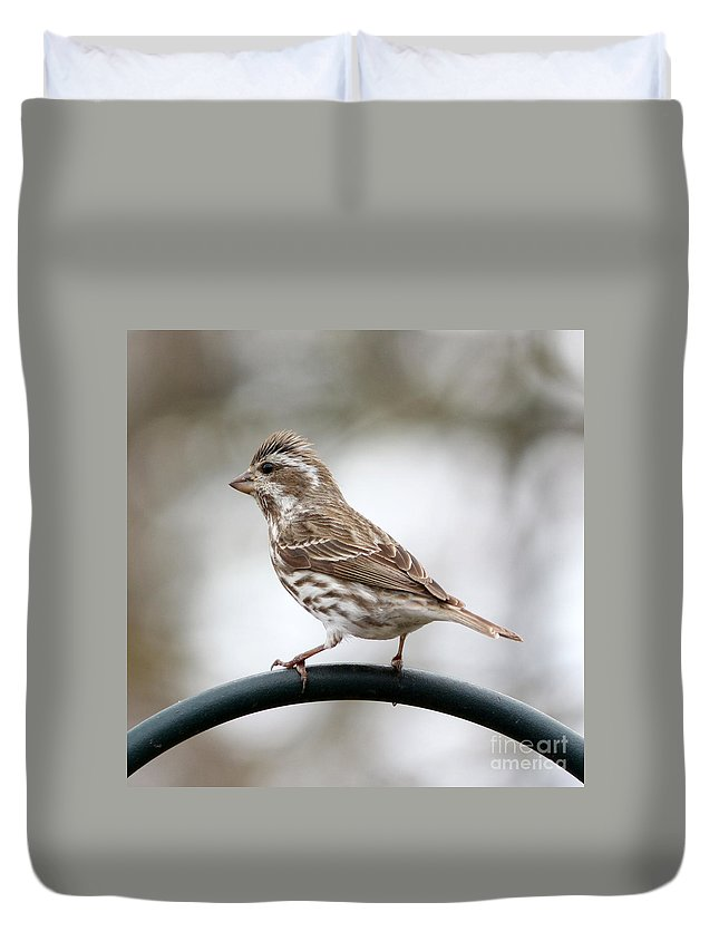 Rose Breasted Grosbeak Duvet Cover featuring the photograph Rose Breasted Grosbeak by Lori Tordsen