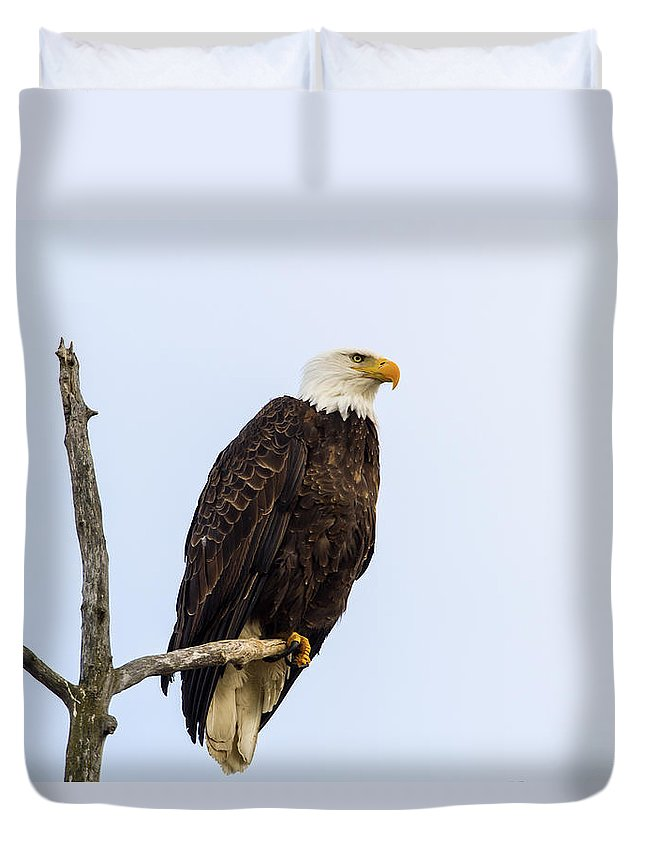 Doug Lloyd Duvet Cover featuring the photograph Sitting In The Morning Sun by Doug Lloyd
