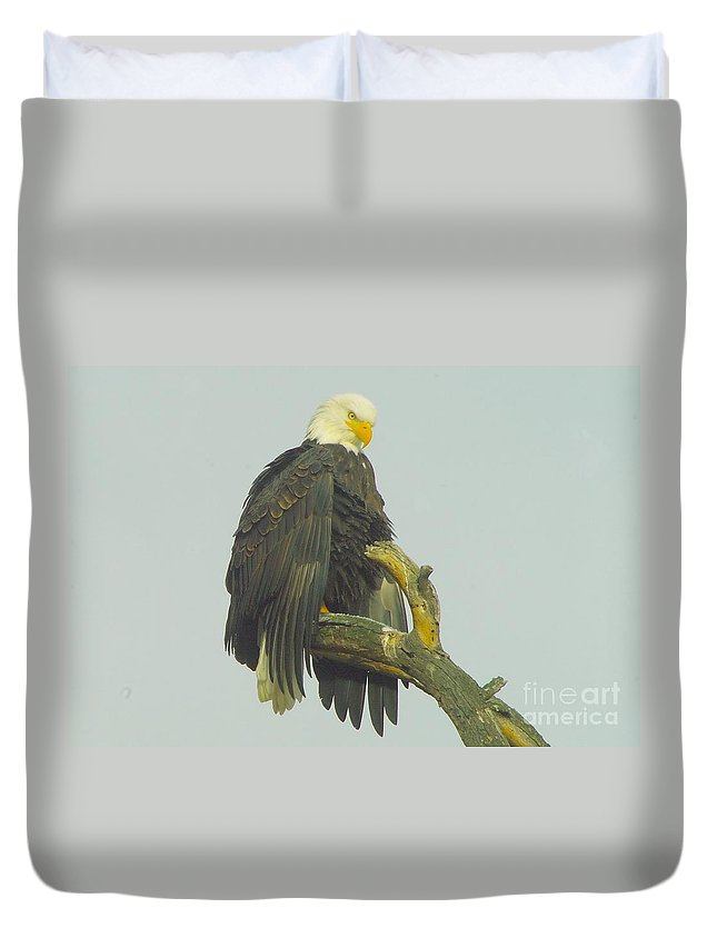 Eagles Duvet Cover featuring the photograph Stretching The Wings by Jeff Swan