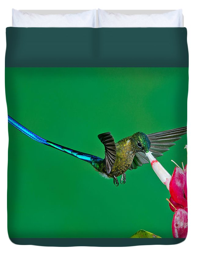 Violet-tailed Sylph Duvet Cover featuring the photograph Violet-tailed Sylph by Anthony Mercieca