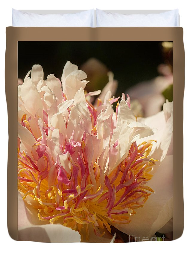 Flora Duvet Cover featuring the photograph White And Pink Peony 2 by Rudi Prott
