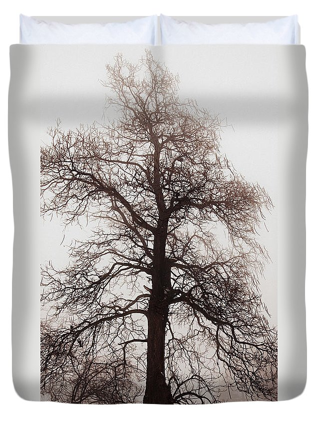 Tree Duvet Cover featuring the photograph Winter Tree In Fog by Elena Elisseeva