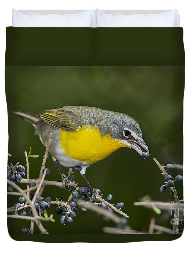 Yellow-breasted Chat Duvet Cover featuring the photograph Yellow-breasted Chat by Anthony Mercieca