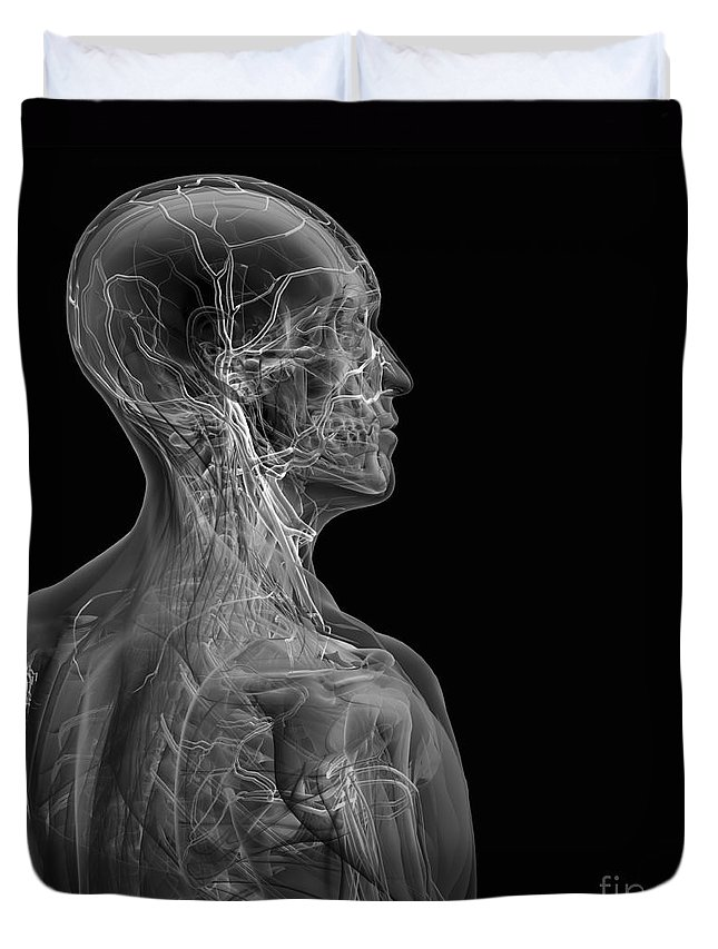 Transparent Duvet Cover featuring the photograph Human Anatomy by Science Picture Co