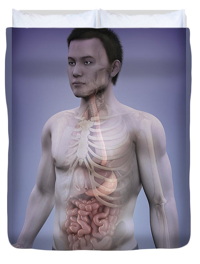 Digitally Generated Image Duvet Cover featuring the photograph Human Anatomy by Science Picture Co