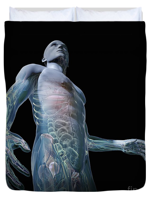 Organs Duvet Cover featuring the photograph Human Anatomy by Science Picture Co