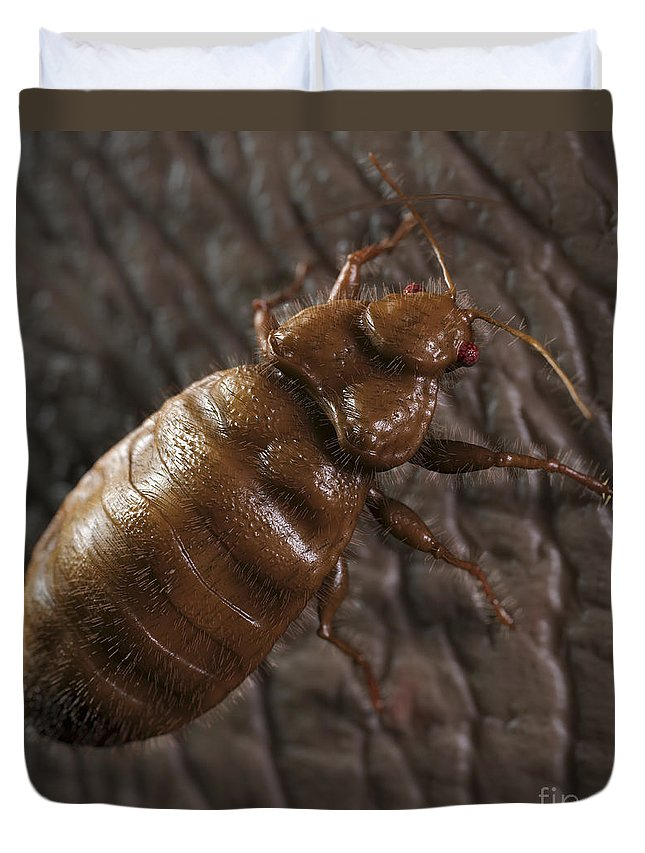 Hematophagy Duvet Cover featuring the photograph Bedbug Cimex Lectularius by Science Picture Co