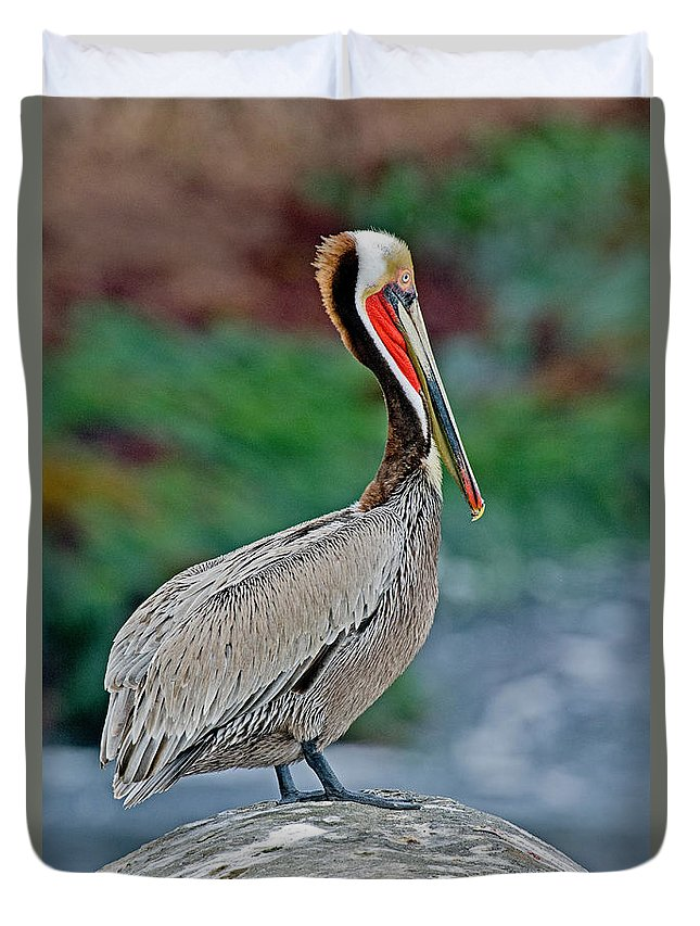 Brown Pelican Duvet Cover featuring the photograph Brown Pelican by Anthony Mercieca