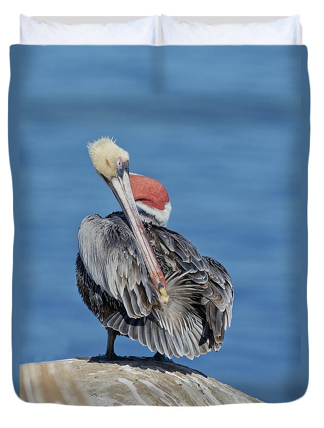 Brown Pelican Duvet Cover featuring the photograph Brown Pelican Preening by Anthony Mercieca