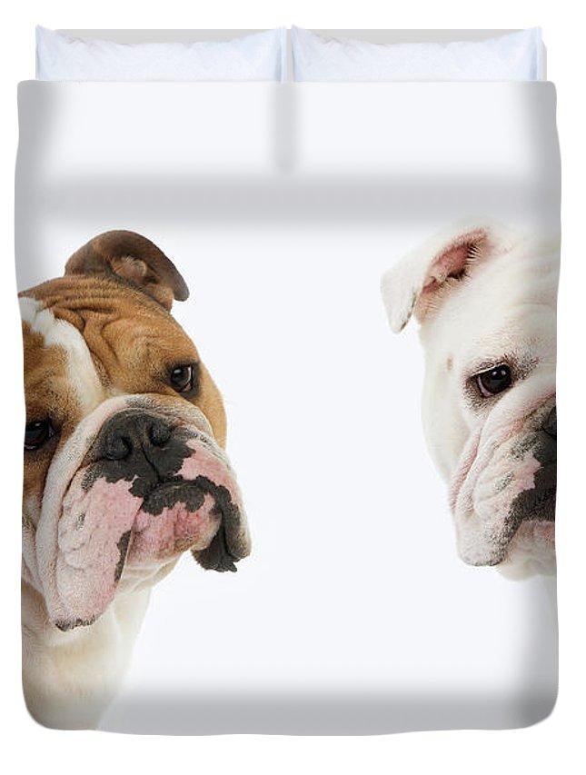 Bulldog Anglais Duvet Cover For Sale By Gerard Lacz