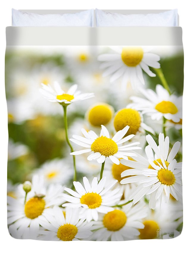 Chamomile Duvet Cover featuring the photograph Chamomile Flowers by Elena Elisseeva