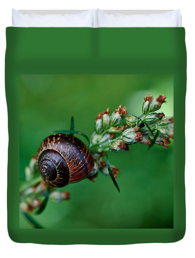 Finland Duvet Cover featuring the photograph Copse Snail by Jouko Lehto