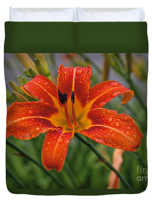 Day Lilly Duvet Cover featuring the photograph Day Lilly by William Norton
