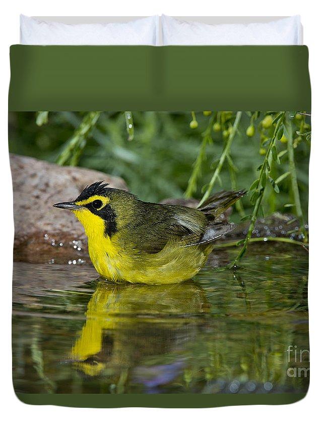 Kentucky Warbler Duvet Cover featuring the photograph Kentucky Warbler by Anthony Mercieca
