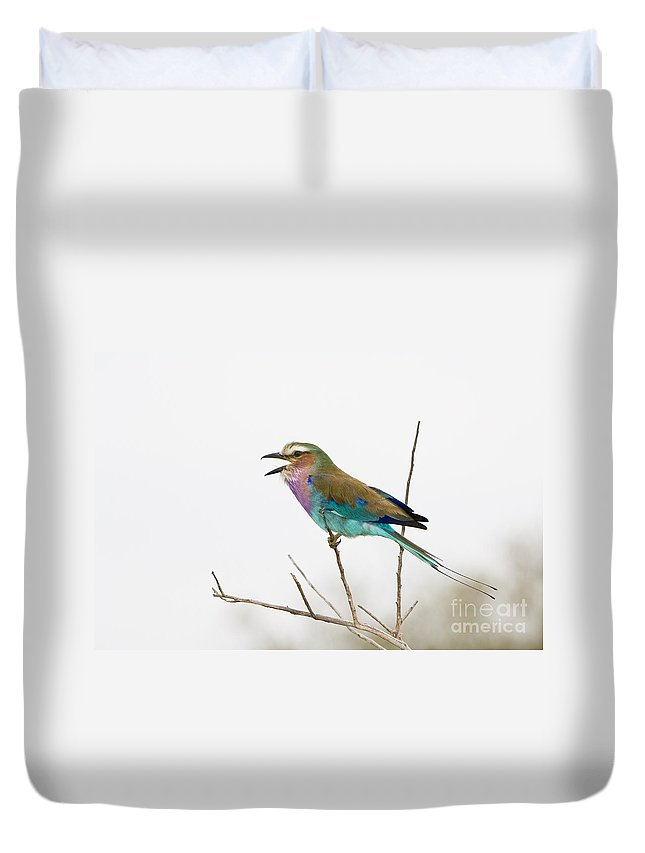 African Fauna Duvet Cover featuring the photograph Lilac-breasted Roller by John Shaw