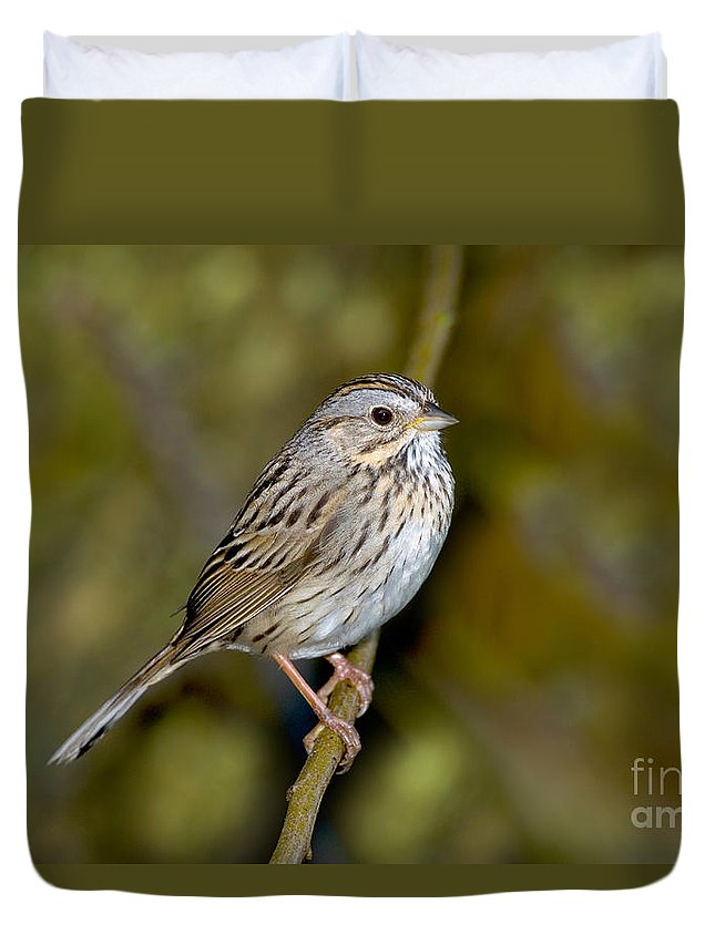 Fauna Duvet Cover featuring the photograph Lincolns Sparrow by Anthony Mercieca