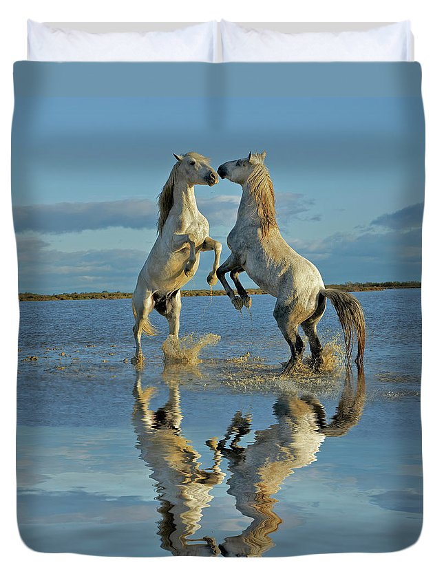 Animals In The Wild Duvet Cover featuring the photograph Pair Of Camargue Horse Stallions by Adam Jones
