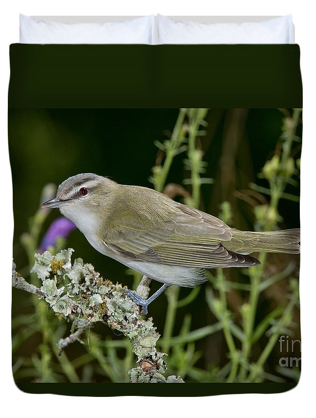 Red-eyed Vireo Duvet Cover featuring the photograph Red-eyed Vireo by Anthony Mercieca