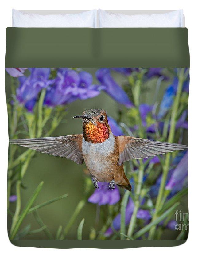 Rufous Hummingbird Duvet Cover featuring the photograph Rufous Hummingbird by Anthony Mercieca