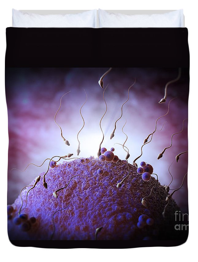 Fertility Duvet Cover featuring the photograph Sperm And Ovum by Science Picture Co