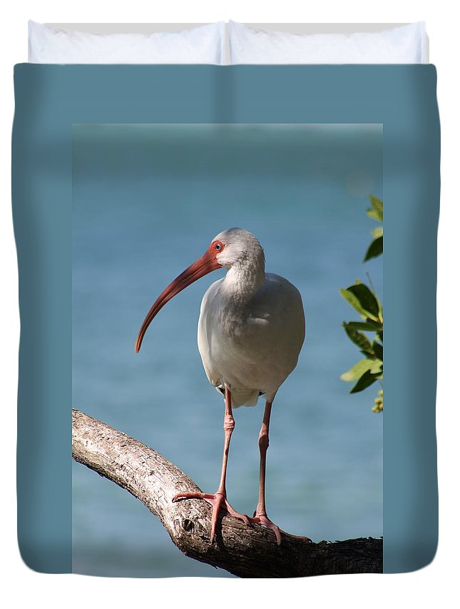 Ibis Duvet Cover featuring the photograph Waiting by Christiane Schulze Art And Photography