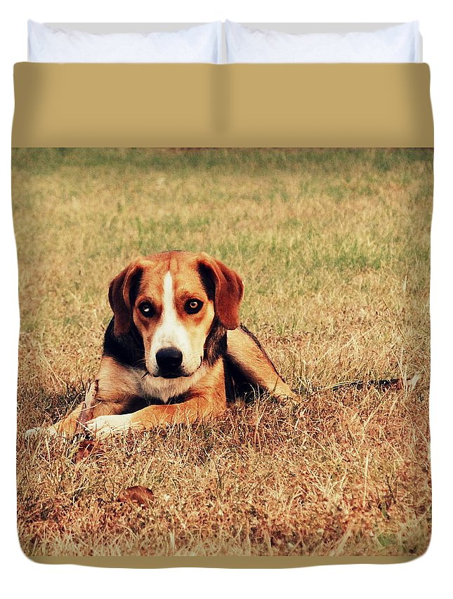 Hound Duvet Cover featuring the photograph 4610 by Onyx Armstrong