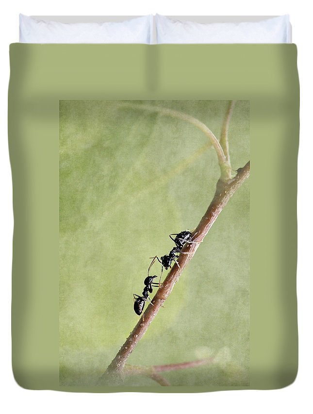 Ant Duvet Cover featuring the mixed media Ant by Heike Hultsch