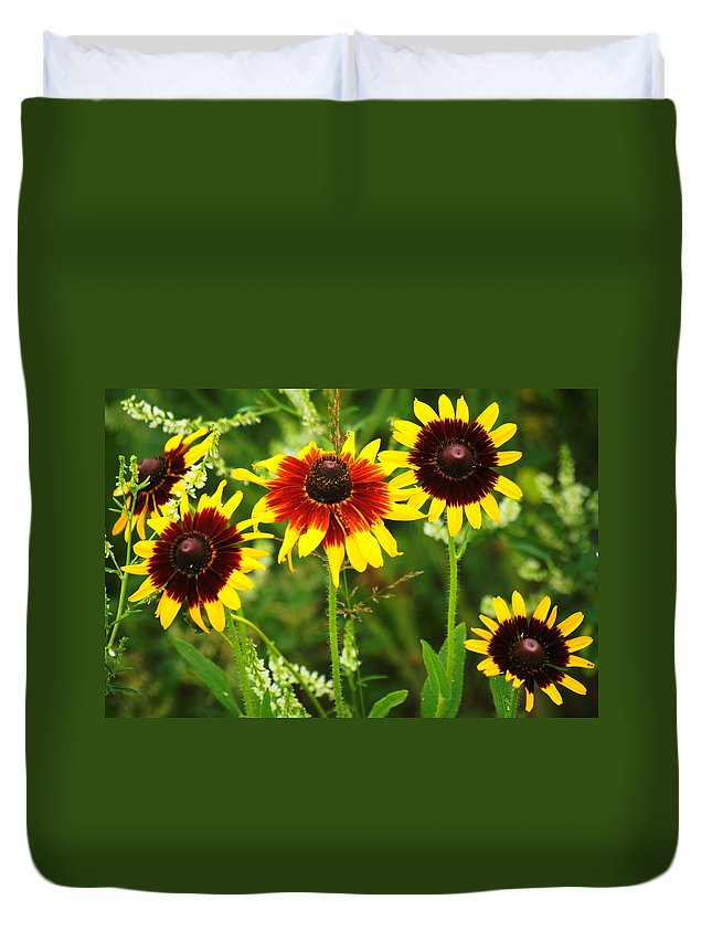 Flower Wild Flower Duvet Cover featuring the photograph 5 Black-eyed Susans by J R Sanders