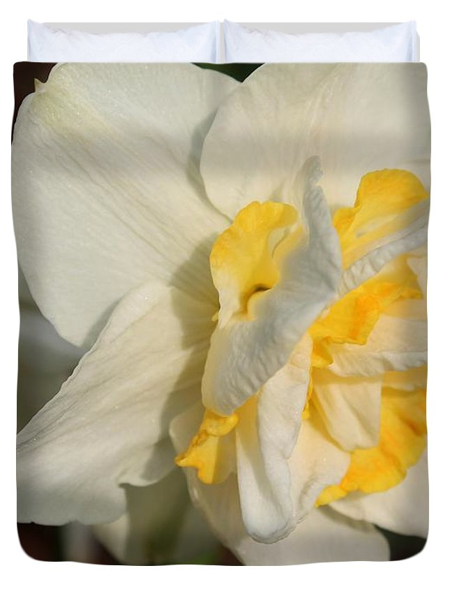 Mccombie Duvet Cover featuring the photograph Double Daffodil Named White Lion by J McCombie