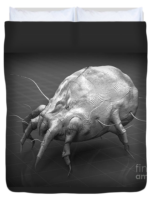 Acari Duvet Cover featuring the photograph Dust Mite by Science Picture Co
