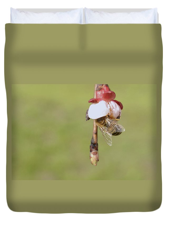 Animal Duvet Cover featuring the photograph Honey Bee Collecting Nectar From An Apple Blossom by Ferenc Kosa