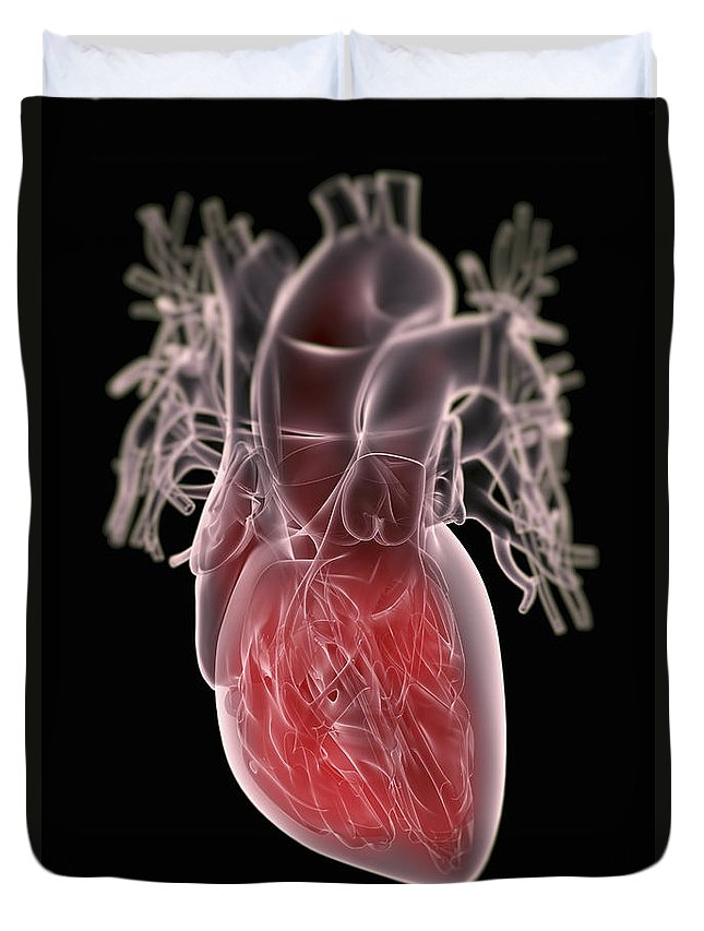 Valves Duvet Cover featuring the photograph Human Heart by Science Picture Co