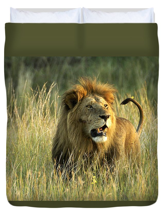 Lion Duvet Cover featuring the photograph King Of The Savanna by Michele Burgess