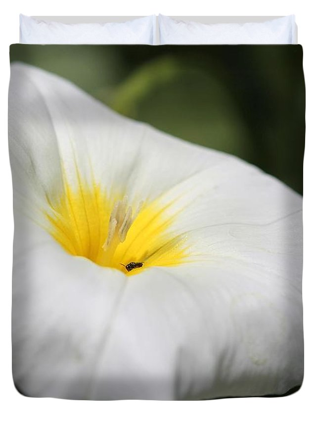 Mccombie Duvet Cover featuring the photograph Morning Glory Named White Ensign by J McCombie