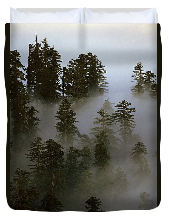 Nature Duvet Cover featuring the photograph Redwood Creek Overlook With Giant Redwoods Sticking Out Above Lo by Jim Corwin