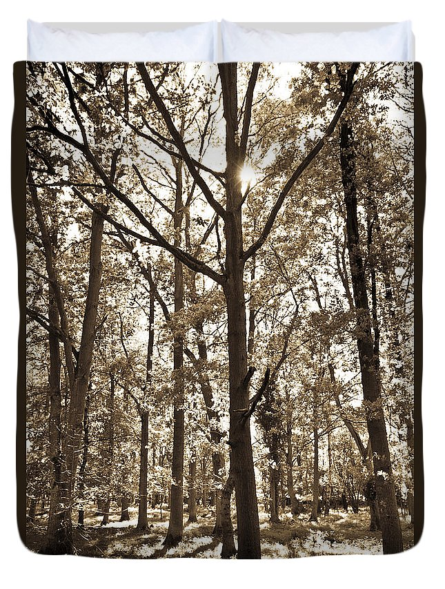 Tree Duvet Cover featuring the photograph The Forest by David Pyatt