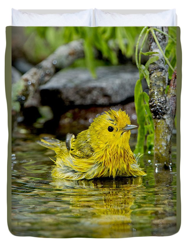 Yellow Warbler Duvet Cover featuring the photograph Yellow Warbler by Anthony Mercieca