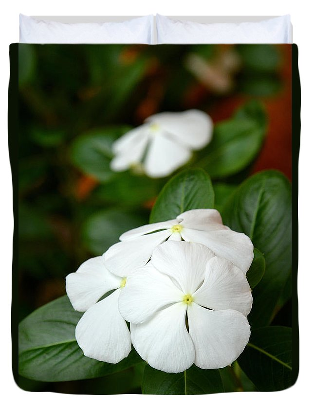 Periwinkle Duvet Cover featuring the photograph Catharanthus Roseus by Antoni Halim