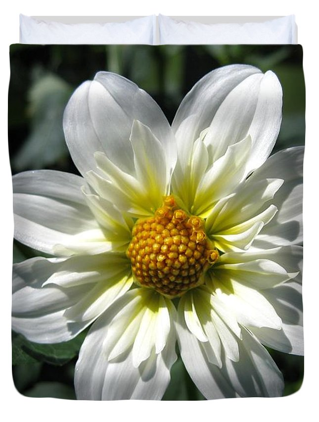 Dahlia Duvet Cover featuring the photograph Dahlia Named Alpen Cherub by J McCombie