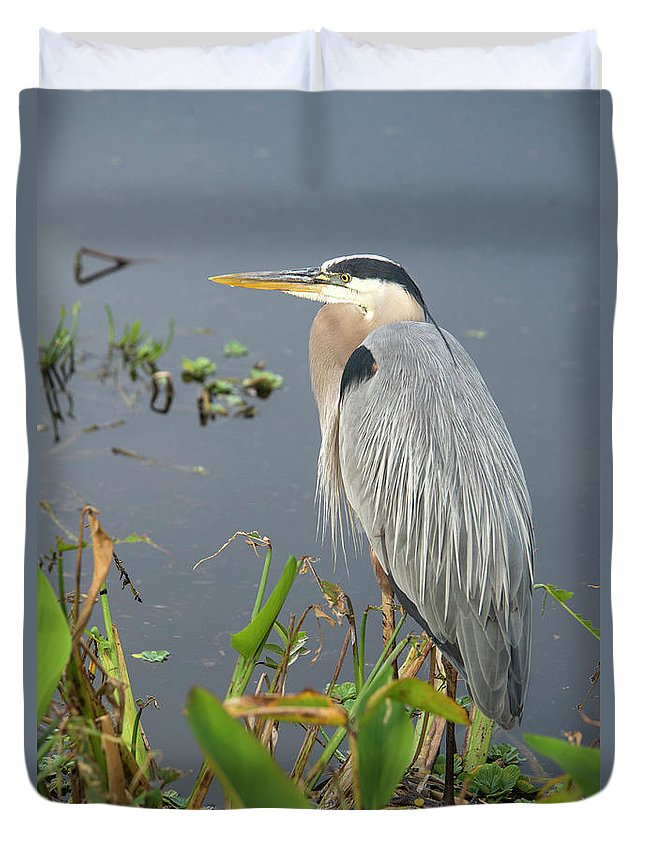 Standing Water Duvet Cover featuring the photograph Great Blue Heron by Mark Newman