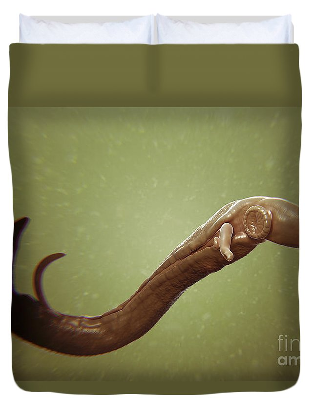 Sick Duvet Cover featuring the photograph Schistosoma Parasite Worm by Science Picture Co