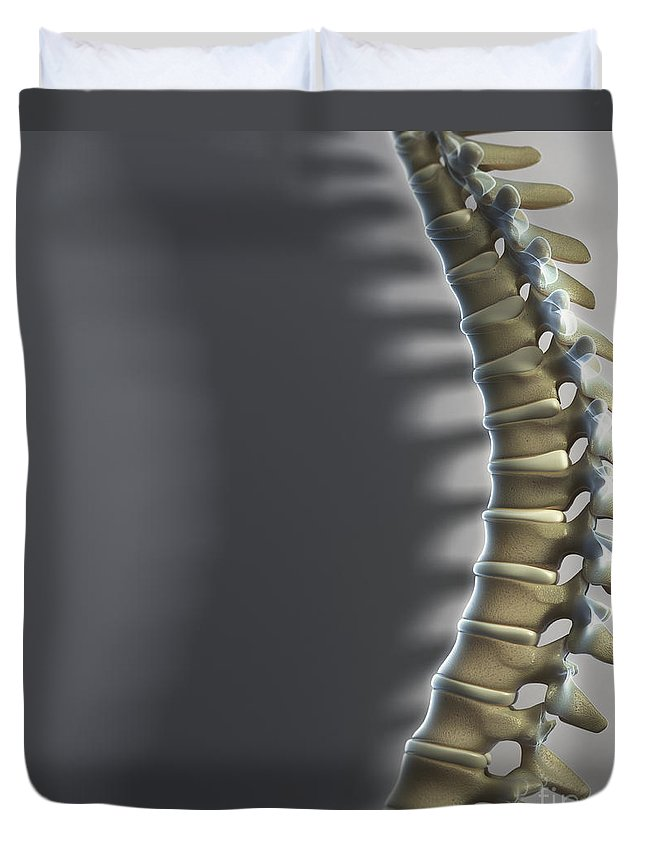 Close-up Duvet Cover featuring the photograph Spinal Anatomy by Science Picture Co
